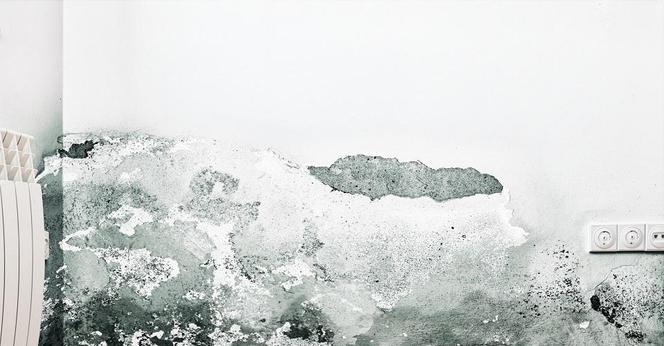 ¿Cómo combatir los problemas de humedad en casa?