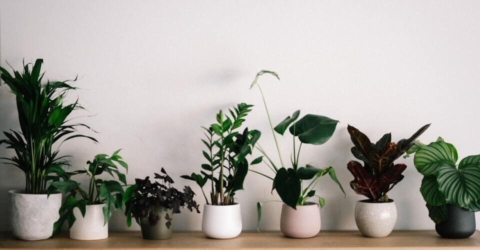 Conocé las mejores plantas de interior para tu hogar