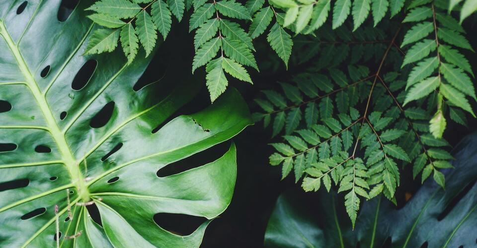 ¿Cómo eliminar diferentes plagas y enfermedades de las plantas?