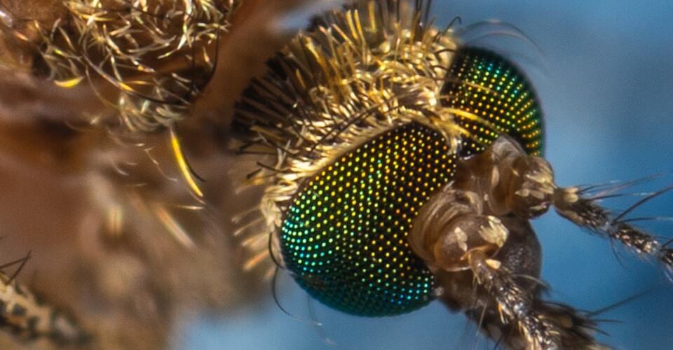 ¿Cómo ahuyentar mosquitos en el hogar?